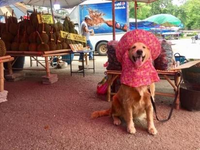 O cachorrinho Jubjib adora fazer poses junto as frutas.
