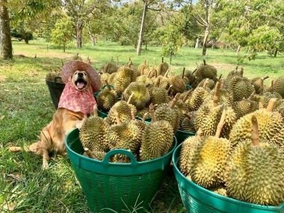 Virou tradição da família tirar fotos todos os anos do cachorrinho ao lada da colheita.