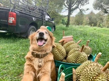 Acho que a maior alegria do Jubjib é tirar fotos com essa fruta.