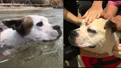 Cachorro herói entra em rio e salva a vida de criança que estava se afogando.