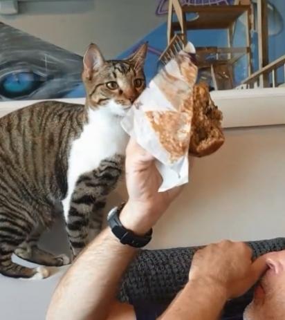 O gatinho Yuzu é apaixonado pelo doce e não importa quem esteja comendo ele sempre vai para o ataque.