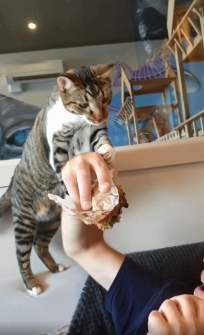 A pessoa pode até tentar desviar, mas o gatinho sempre dá um jeito de atacar o bolinho.