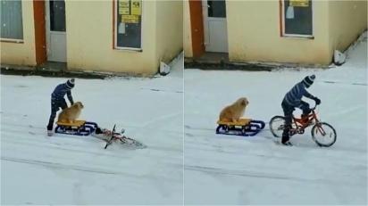 Menino puxa seu cachorro em um trenó com sua bicicleta em vídeo adorável.