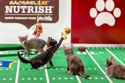O evento Kitten Bowl irá ao ar no próximo domingo (7) no canal da Hallmark Channel.