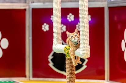 O evento surgiu em 2014 e desde a sua primeira edição já ajudou mais de 50 mil animais.