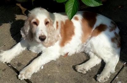 A cachorrinha Daisy foi descrita por Pam como o orgulho e alegria do casal durante o isolamento social.