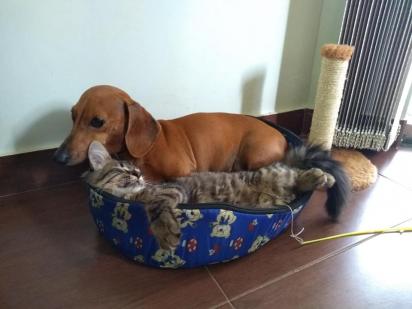 Os dois adoram dormir em posições engraçadas.