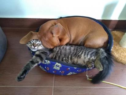 Não importa se a cama é pequena, o que importa é a companhia.