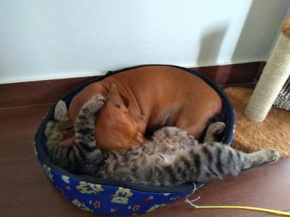 Vale até um abraço de gato para dormir bem.