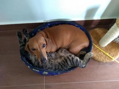 Uma alongada durante o sono e acordar a companheira também está valendo.