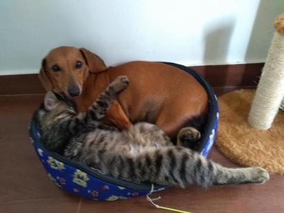 Acho que o gatinho Xefinho tem sono profundo, já a Jade...