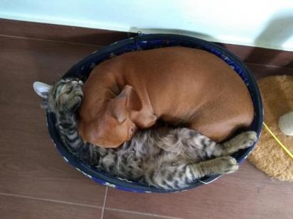 Se apertando, sempre há um espaço para dormir.