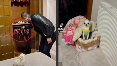 Cadelinha chihuahua apaixonada por vestir vestidinho para ir passear com o papai viraliza no TikTok