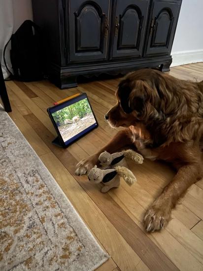 A cachorrinha Stella adora assistir programas com esquilos.