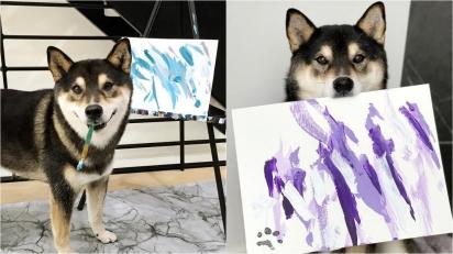 Talentoso cão shiba inu tem a sua própria renda com a venda das suas pinturas.