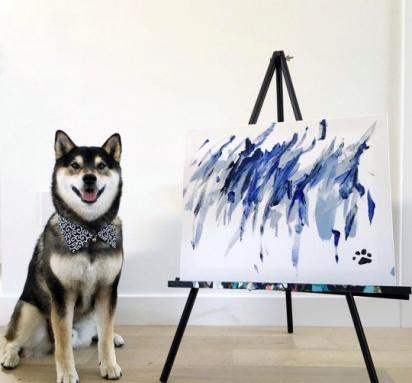 Hunter, da raça shiba inu é muito talentoso e tem mostrado o seu talento com a pintura.
