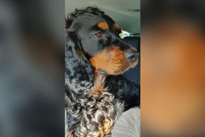 Angela Casale tem pedido ajuda da comunidade para encontrar o seu cão.