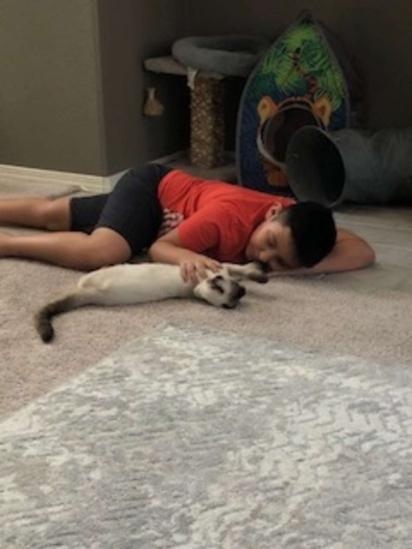 Liam, o garotinho, e Frankie, o gatinho são amigos inseparáveis.