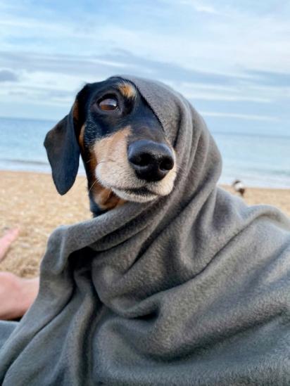 Pip se recuperou totalmente após pilates caninos, terapia de almofada e paddleboarding.