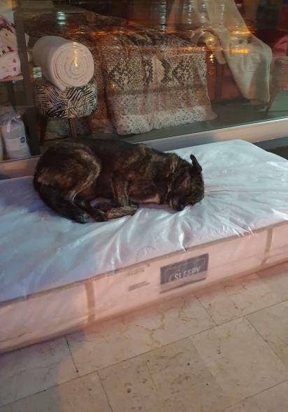 A loja disponibiliza colchão, água e ração para os cachorros de rua.