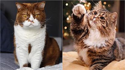 Estudo revela cinco perfis predominantes nos gatos; descubra qual é o seu.