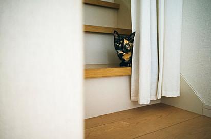 Os gatos A nervosa Nala são considerados introspectivo e tímido.