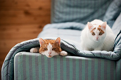 Os gatos A Bella mandona adoram comandar.