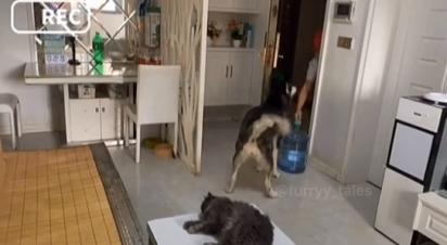O homem entrega a água e espera o husky lhe entregar o dinheiro.
