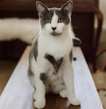 River, o gato que tem um coração para cada crush.