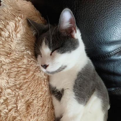 River, o gatinho que tem sete vidas por ter sete corações.