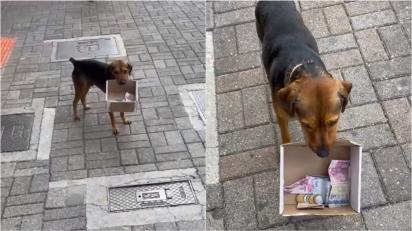 Cachorro ajuda dono a arrecadar dinheiro segurando caixinha com doações.