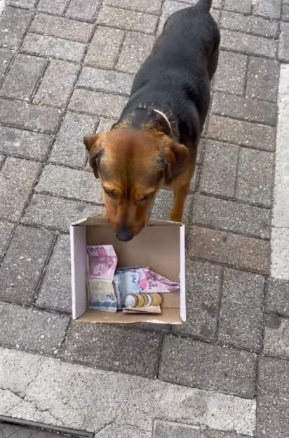 O cachorro Bingo e a caixinha de dinheiro, essa é a cara de quem vai gastar tudo em petisquinho de bacon.