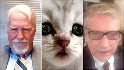 Advogado usa filtro de gato sem querer em audiência no Zoom.