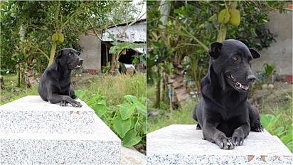 Cadela fiel passa horas em cima do túmulo do seu dono que morreu aos dois anos.