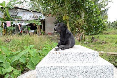 Desde que Khet, 2 anos, faleceu, a cadelinha não sai de perto do túmulo.