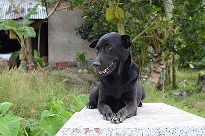 A cadelinha Mino era muita apegada a criança e sofreu muito com a sua morte.
