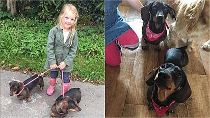 Família oferece cerca de R$ 148 mil como recompensa para quem encontrar seus cães.