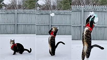 Gato 'ninja' conhece a neve pela 1ª vez e demonstra ser um ótimo goleiro