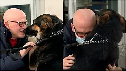 Cadela pastor alemão que salvou a vida do dono finalmente o reencontra.
