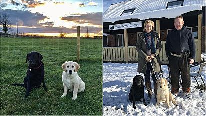 Fazendeiros criam espaços recreativos para cães em suas fazendas.