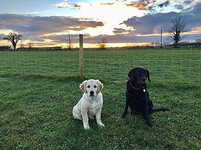 Contabiliza-se que a Inglaterra tenha mais de 450 campos de jogos para cães disponíveis para aluguel.