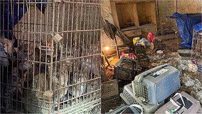 Mulher é presa por maus-tratos ao manter 118 gatos em péssimas condições em sua casa.