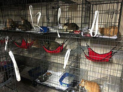 Quando reabilitados, os gatos estarão disponíveis para adoção.