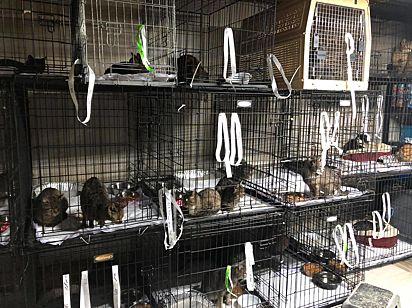 Os gatinhos foram resgatados e estão em recuperação.