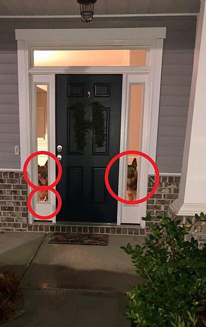 Não foi difícil achar o terceiro cachorro.