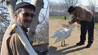 Após salvar cisne ferido, homem completa 37 anos de amizade com ave.