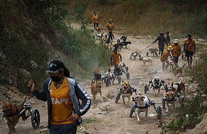 O abrigo, administrado por uma fundação chamada The Man That Rescues Dogs, foi criado por um sueco que se mudou para Chonburi em 2002