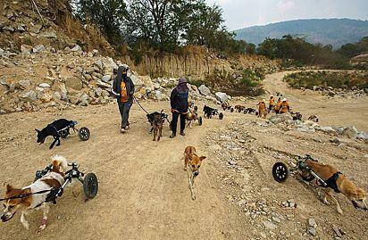 Os 27 cães, em sua maioria vítimas de acidentes, estão sendo tratados e reabilitados no abrigo.