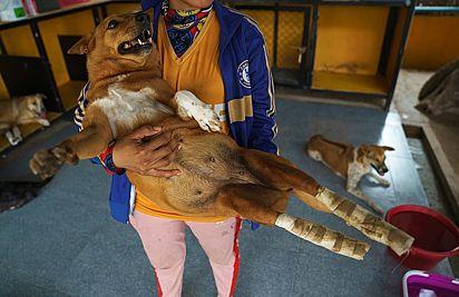 O abrigo atende cães de diferentes origens e oferece até sessões de fisioterapia.