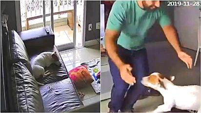 Homem deixa câmera em casa para descobrir o que o seu cãozinho fazia.